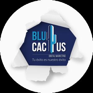 BluCactus / logos