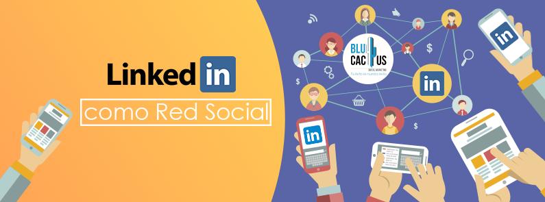 BluCactus / LinkedIn como red social / titulo