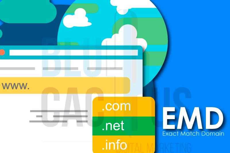 BluCactus Google Exact Match Domain Algoritmo