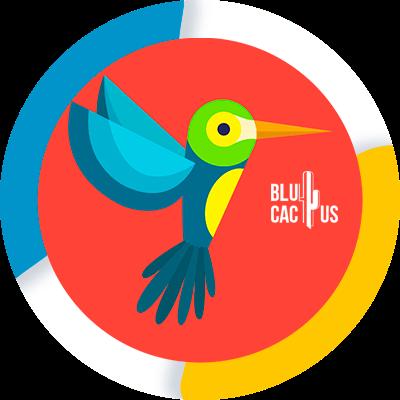 BluCactus - Algoritmos de Google - google seo