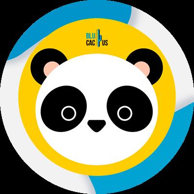 BluCactus - Algoritmos de Google - panda