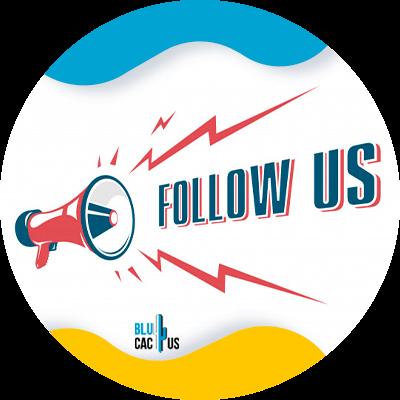 BluCactus - follow us