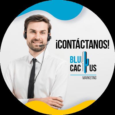 BluCactus -diseño de sitios web exitosos - contacto