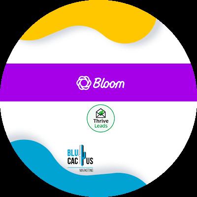 BluCactus - que es un blog - leads