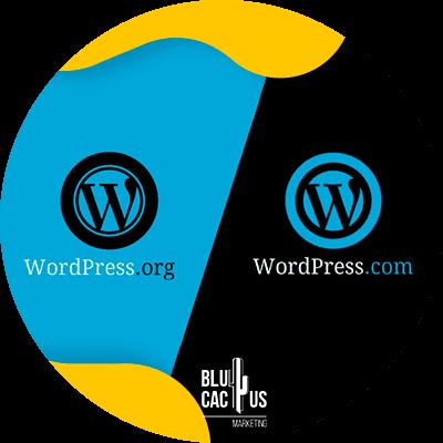 BluCactus - que es un blog - wordpress