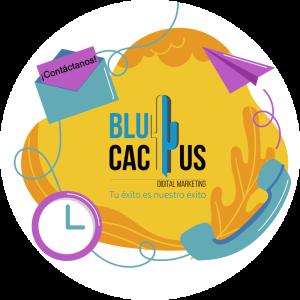 Blucactus-Conclusión