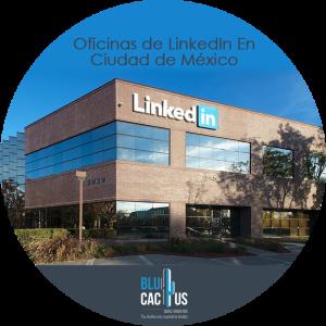BluCactus - mexico