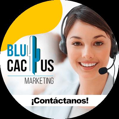 BluCactus - contacto
