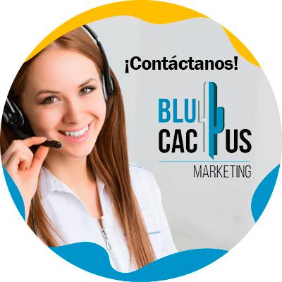 BluCactus - White Hat SEO - contacto