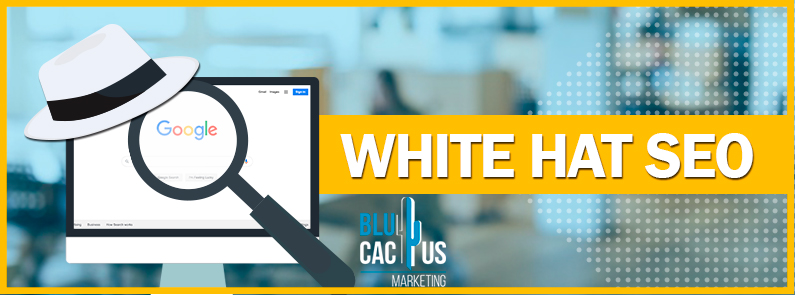 BluCactus - White Hat SEO - titulo