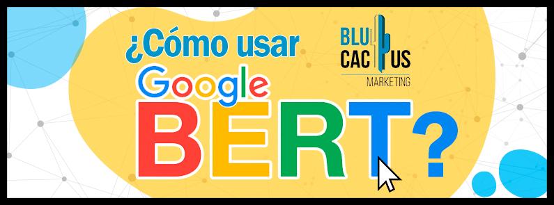 Blucactus - Como usar Google Bert