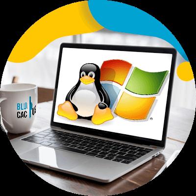 BluCactus - Hosting Web - ejemplo de herramienta en linea