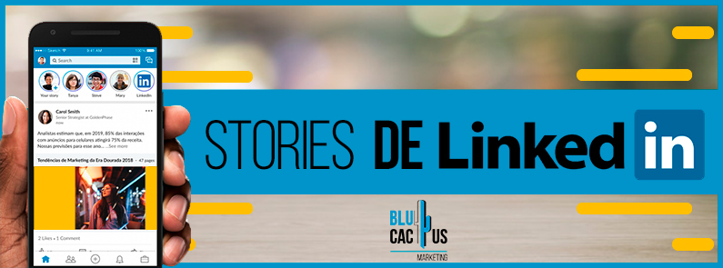 BluCactus - Stories de LinkedIn - titulo
