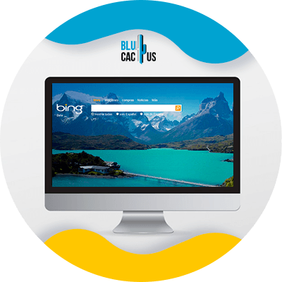 BluCactus - ejemplo de un buscador de seo