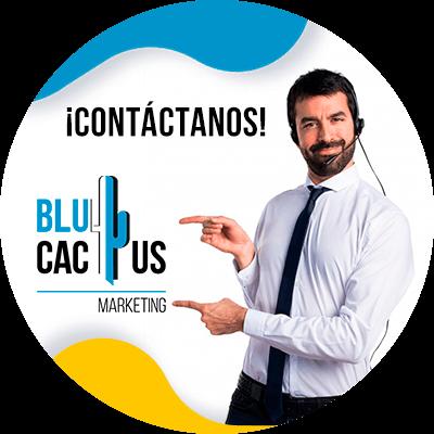BluCactus -conclusion