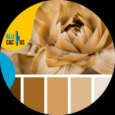 BluCactus - logo de una empresa de moda - marron