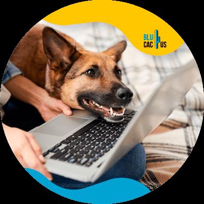 BluCactus - tienda de mascotas - información importante