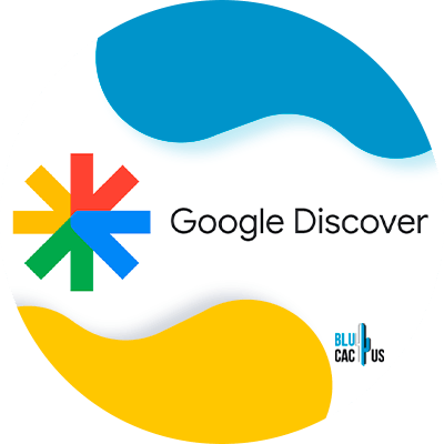 BluCactus - Google Discover - informacion importante